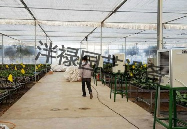 Application of Electric Heater in Phalaenopsis Greenhouse